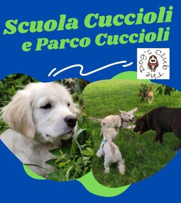 SCUOLA CUCCIOLI