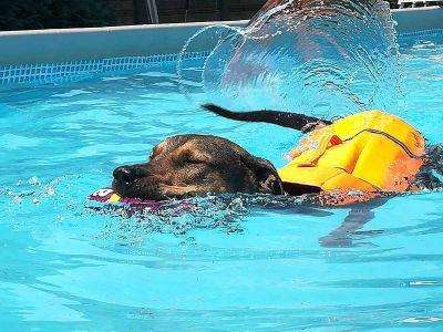 La sede - attività natatorie