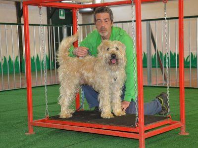 La sede - mobility dog