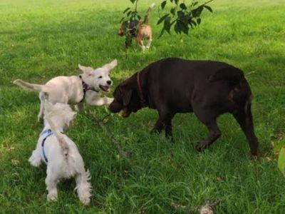 La sede - socializzazione cuccioli