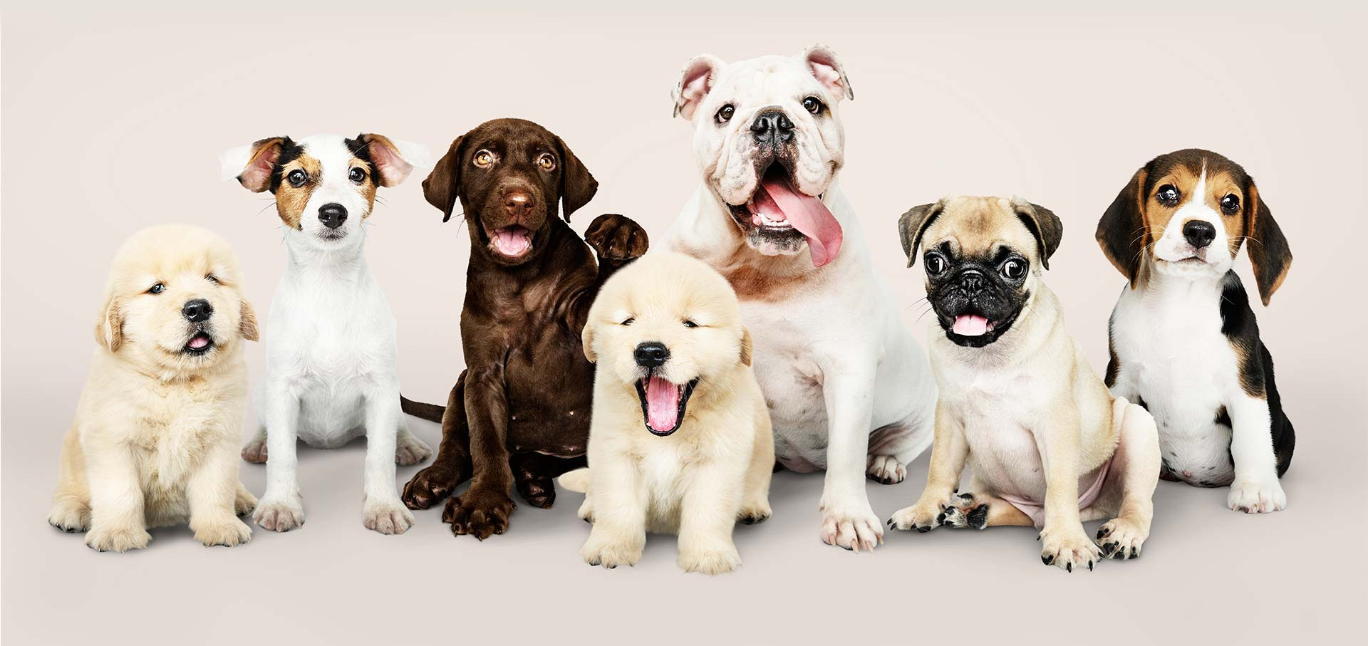 The Dog's Club - servizi